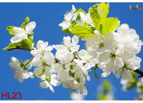 Tranh Hoa Lá HL23