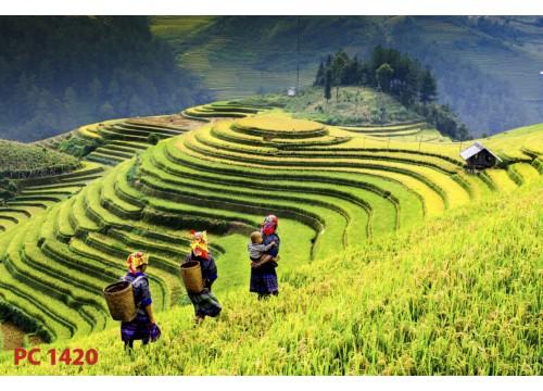Tranh Phong Cảnh PC1420